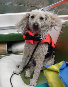 awesome boat dog